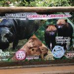 神戸どうぶつ王国の見どころとイベント情報!割引入場券と飲食店を紹介!