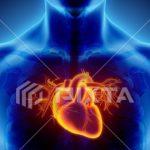 心臓の鼓動はどんなときに速くなるのか!心臓の役割も見てみよう!